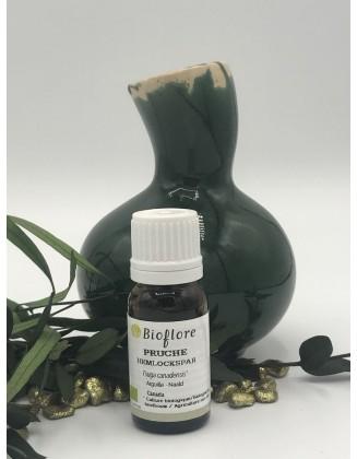Huile essentielle de Pruche bio - 10 ml - Bioflore