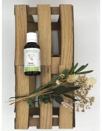 Figuier - Ficus Carica - sans alcool - bio - 50 ml - Herbiolys