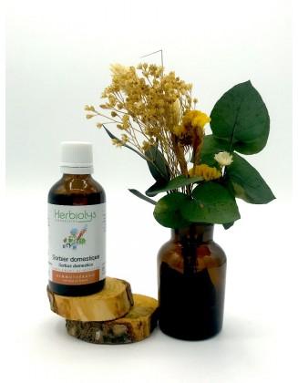 Sorbier - Sorbus domestica - bio - 50 ml - Herbiolys